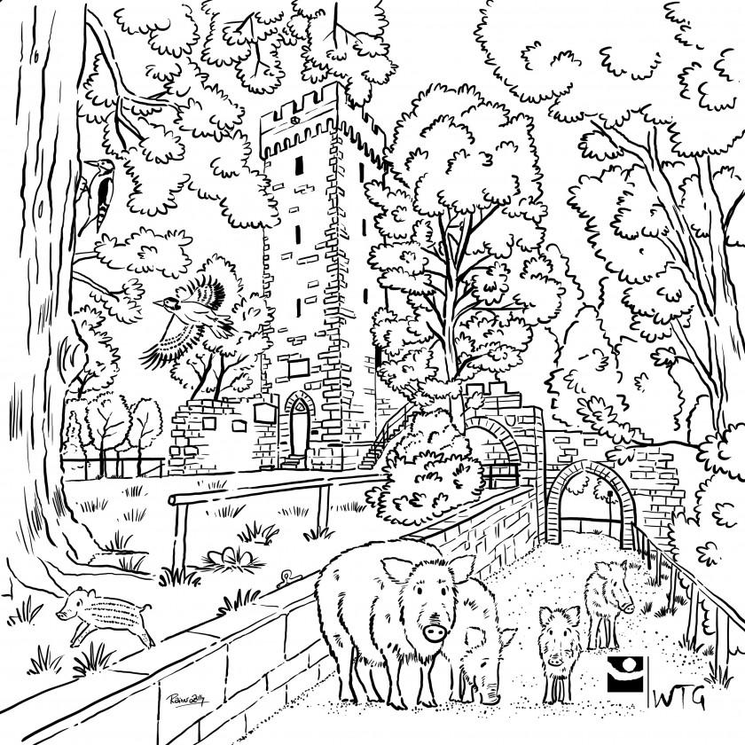 Weilerburg mit Wildschweinen in Rottenburg am Neckar